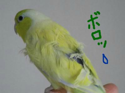 snap_0125juju_201210504453.jpg