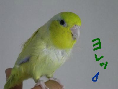 snap_0125juju_201210504820.jpg