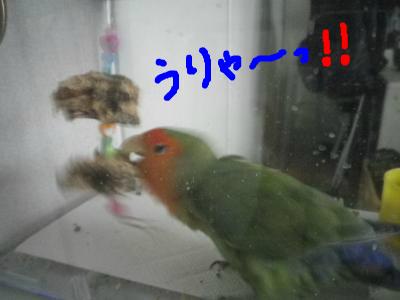 snap_0125juju_201210511030.jpg