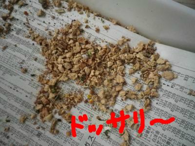 snap_0125juju_201210511741.jpg