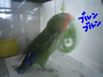 snap_0125juju_201211017342.jpg