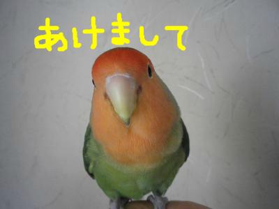 snap_0125juju_2012121191024.jpg