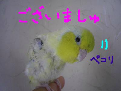 snap_0125juju_2012121193242.jpg