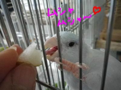 snap_0125juju_201284151755.jpg