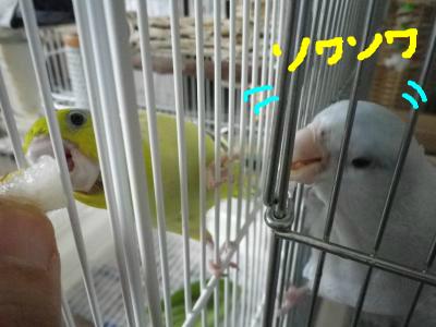 snap_0125juju_20128518646.jpg