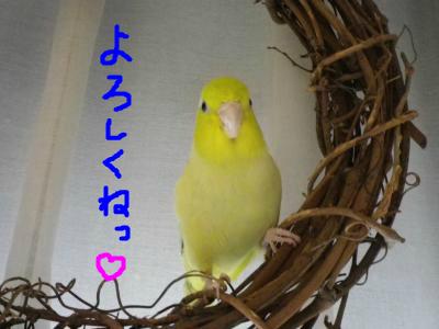 snap_0125juju_201290233445.jpg