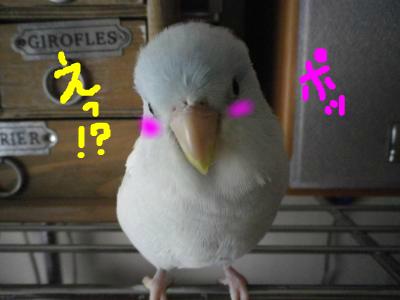 snap_0125juju_201291223219.jpg