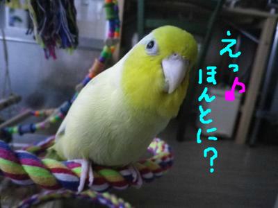 snap_0125juju_20129420346.jpg
