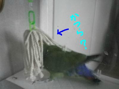 snap_0125juju_201295222527.jpg