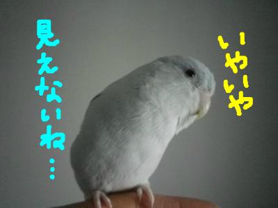 snap_0125juju_201323181020.jpg