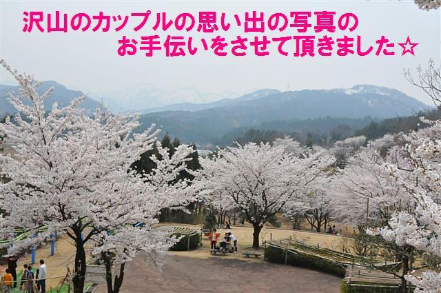 桜からの出会い (4)