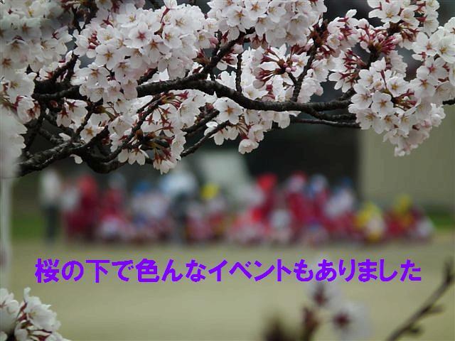 桜からの出会い (8)