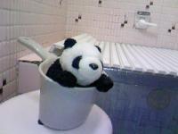 パンダ入浴