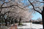 鴻巣公園1