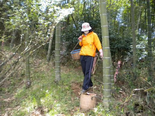 竹の子狩り-4a