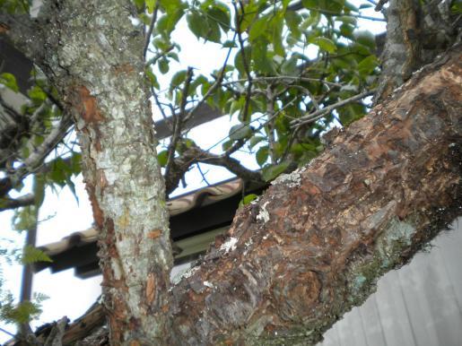 樹木クリーニング2