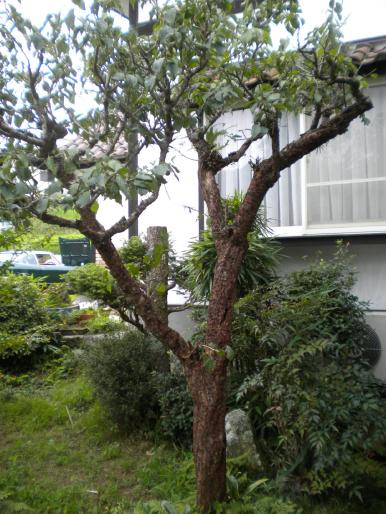 樹木クリーニング3