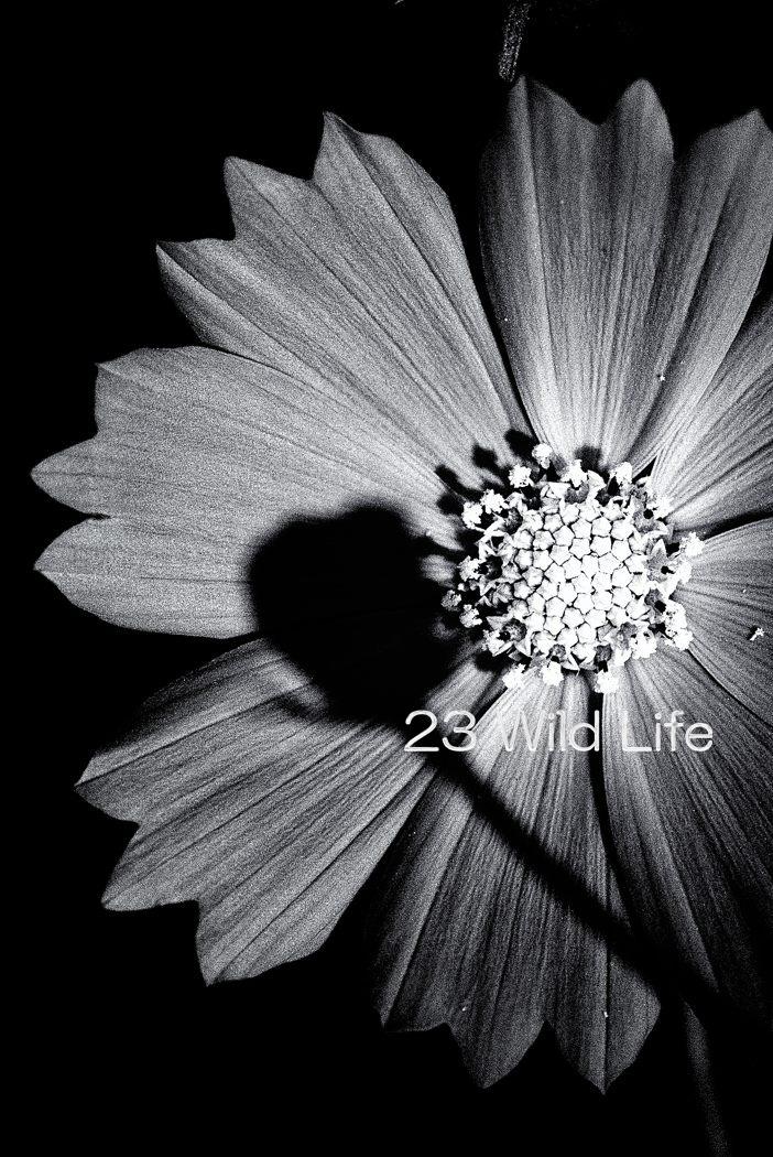 2007 コスモス 066-Editのコピー