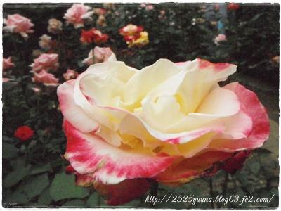 F20120520鎌倉文学館04