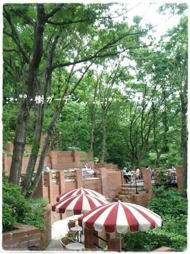 F20120520樹ガーデン01