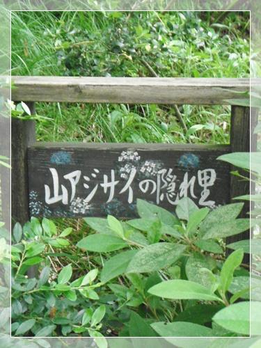 F20120602山アジサイ隠れ里01