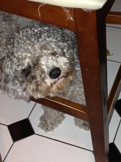 Dexter1-15Nov12.jpg