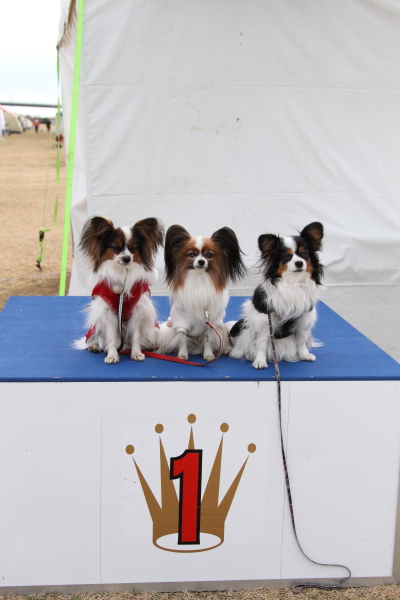 平塚訓練競技会 ブログサイズ0028