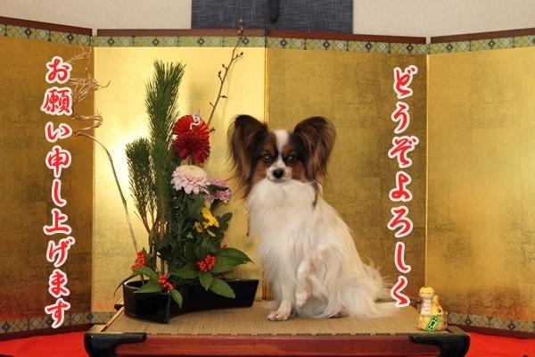 2012_12_29 お正月写真IMG_7747