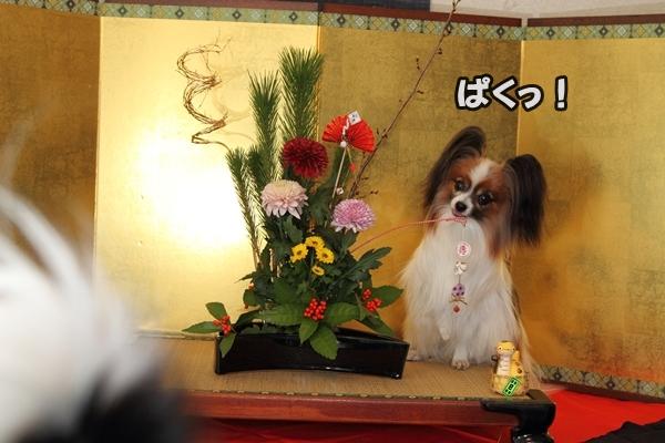 2012_12_29 お正月写真IMG_7753