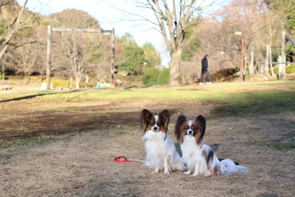 ふるさと公園 01/04IMG_0766ふるさと公園