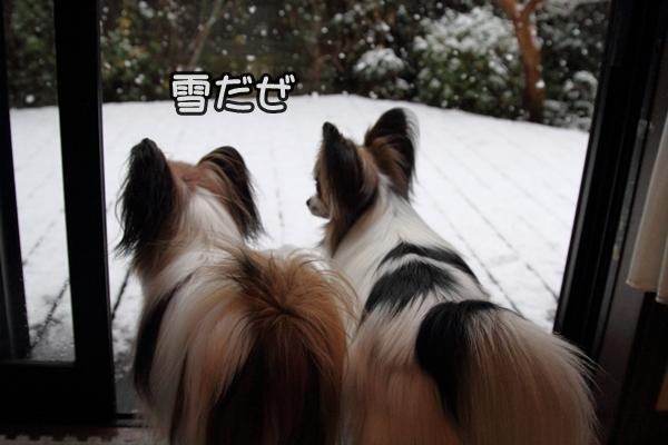 初雪初雪0014