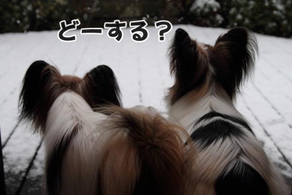 初雪初雪0017