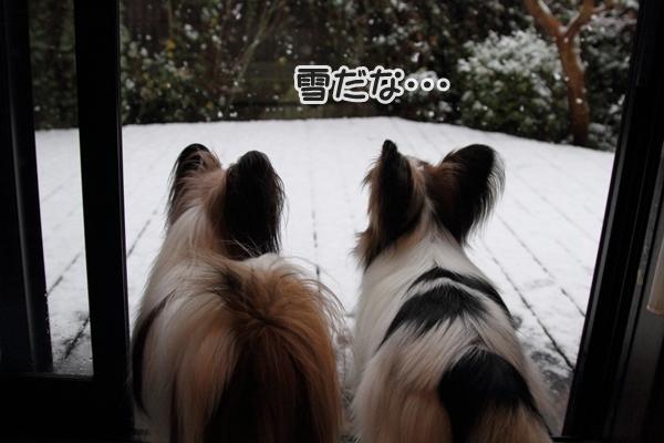 初雪初雪0015