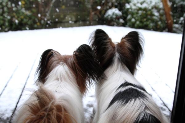初雪初雪0016