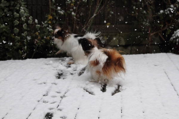 初雪初雪0019