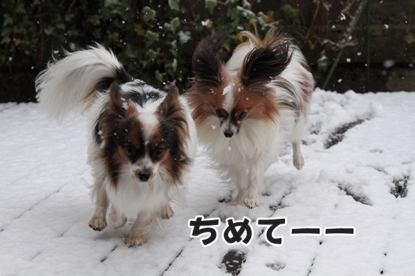 初雪初雪0020