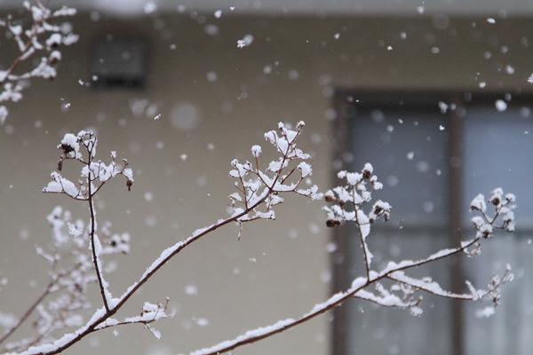 初雪初雪0033