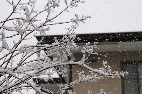 初雪初雪0037