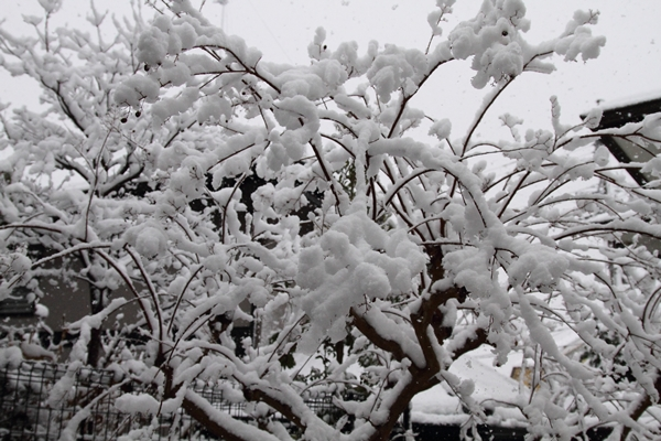 初雪初雪0045