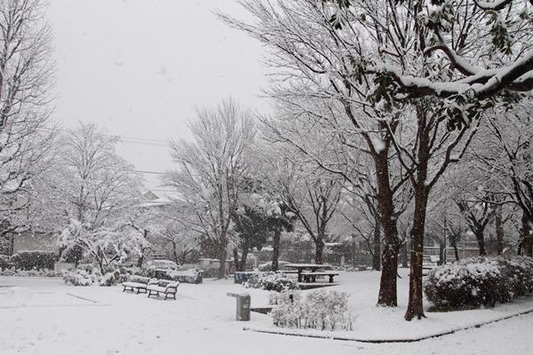初雪初雪0061