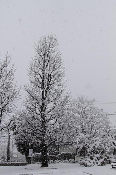 初雪初雪0063