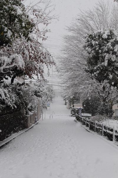 初雪初雪0072
