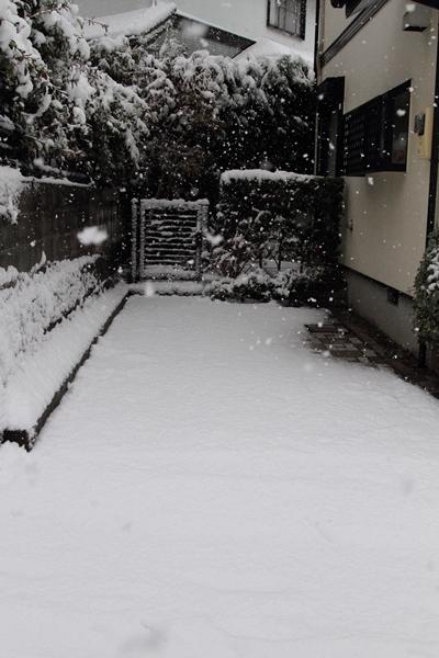 初雪初雪0057