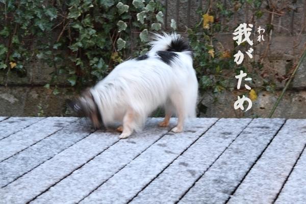 IMG_8158また雪
