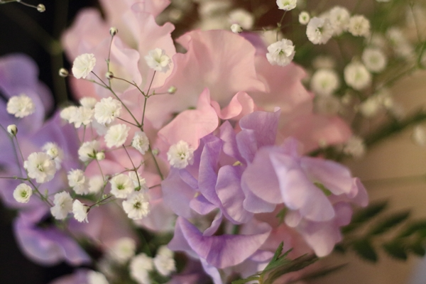 IMG_0948エルの花 スイートピー