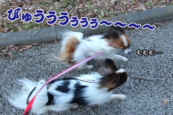 IMG_0998都筑中央公園都筑中央公園