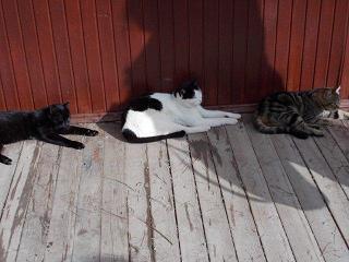 687 三匹の猫 (2)