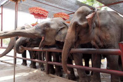 Ayutaya_Elephant_1203-101.jpg