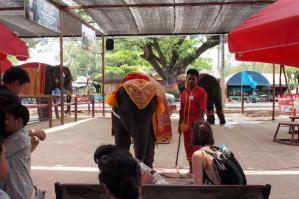 Ayutaya_Elephant_1203-104.jpg