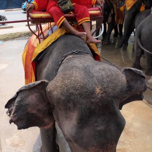Ayutaya_Elephant_1203-105.jpg